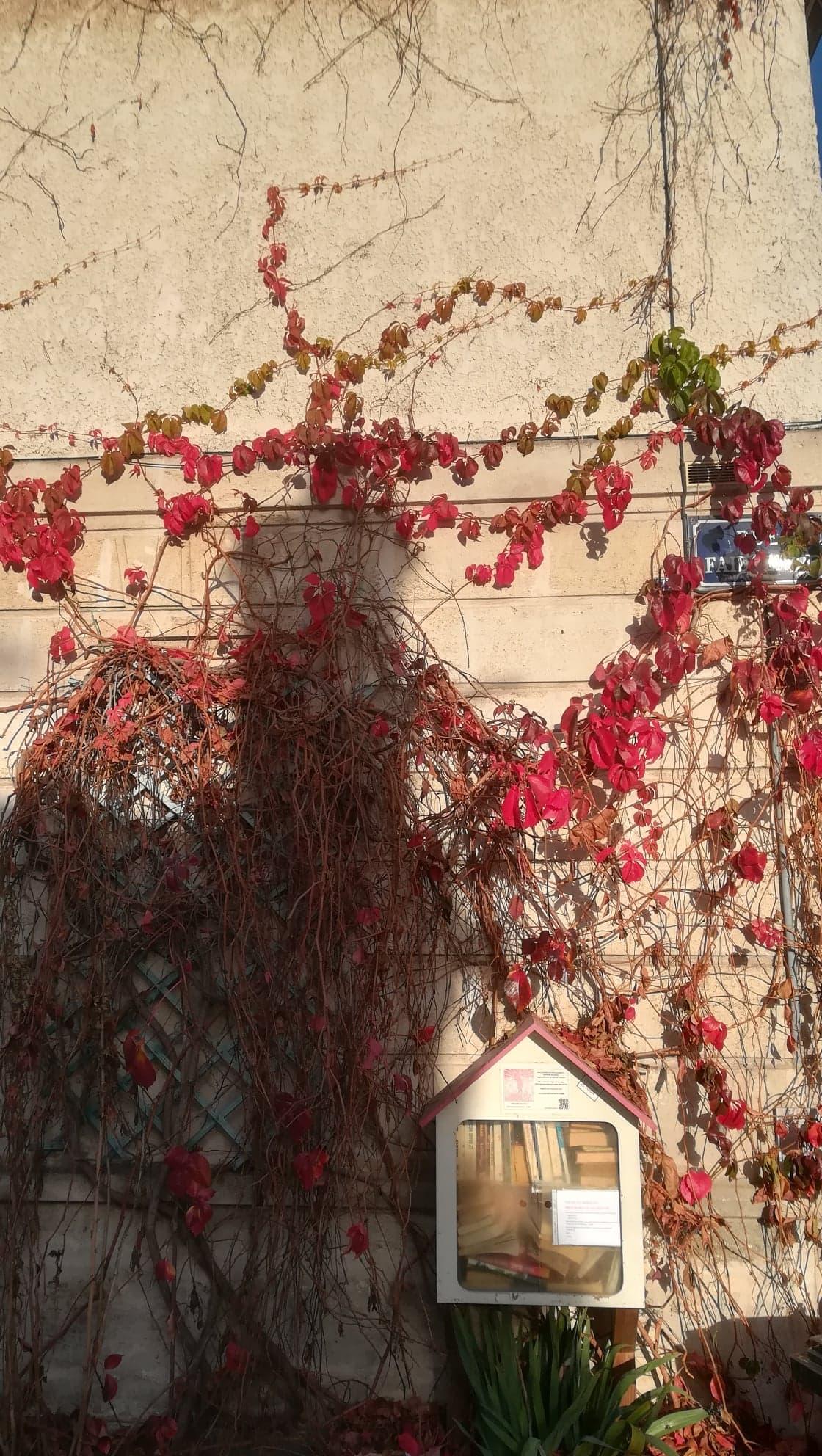 Sur une façade beige, du lierre rouge, par endroits vert, l'escalade presque jusqu'au toit. En haut, à droite, dissimulé en partie par les feuilles, le nom de la rue : Faidherbe. Près de la moitié de l'image, à gauche, est assombrie par les maisons de l'autre côté de la rue, derrière le·la spectateur·trice. À l'interstice entre l'ombre et la lumière, une maisonnette, comme un nichoir à oiseaux, près du sol, est accrochée à la façade. À l'intérieur, des livres, en libre-service. En-dessous, une plante verte aux feuilles larges et longues.