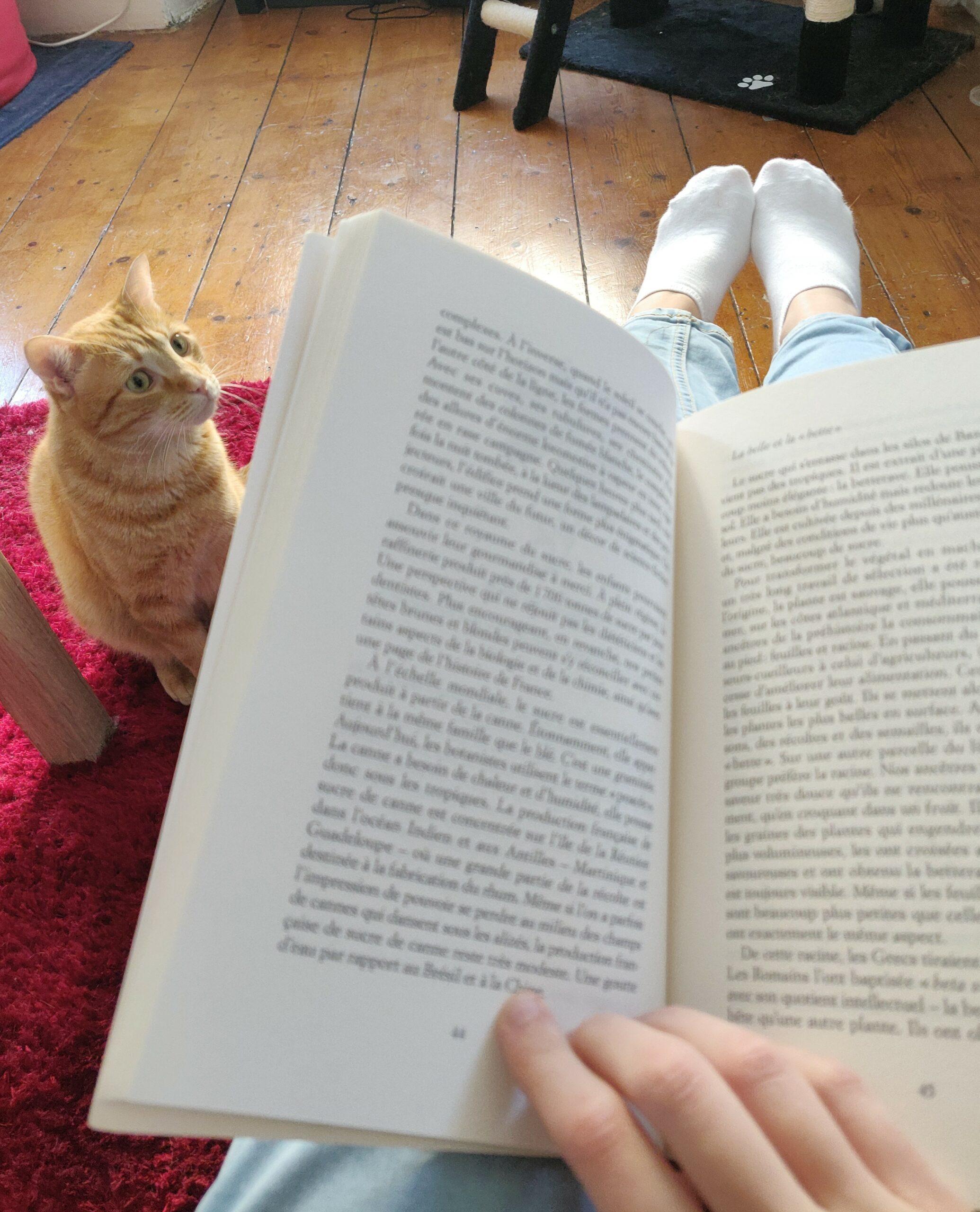 Au premier plan, un livre et une main qui le tient ouvert. Au second plan, un chat roux sur un tapis rouge. Ce petit chat à un air intrigué. A l'arrière plan on distingue aussi une partie d'arbre à chat, noir.