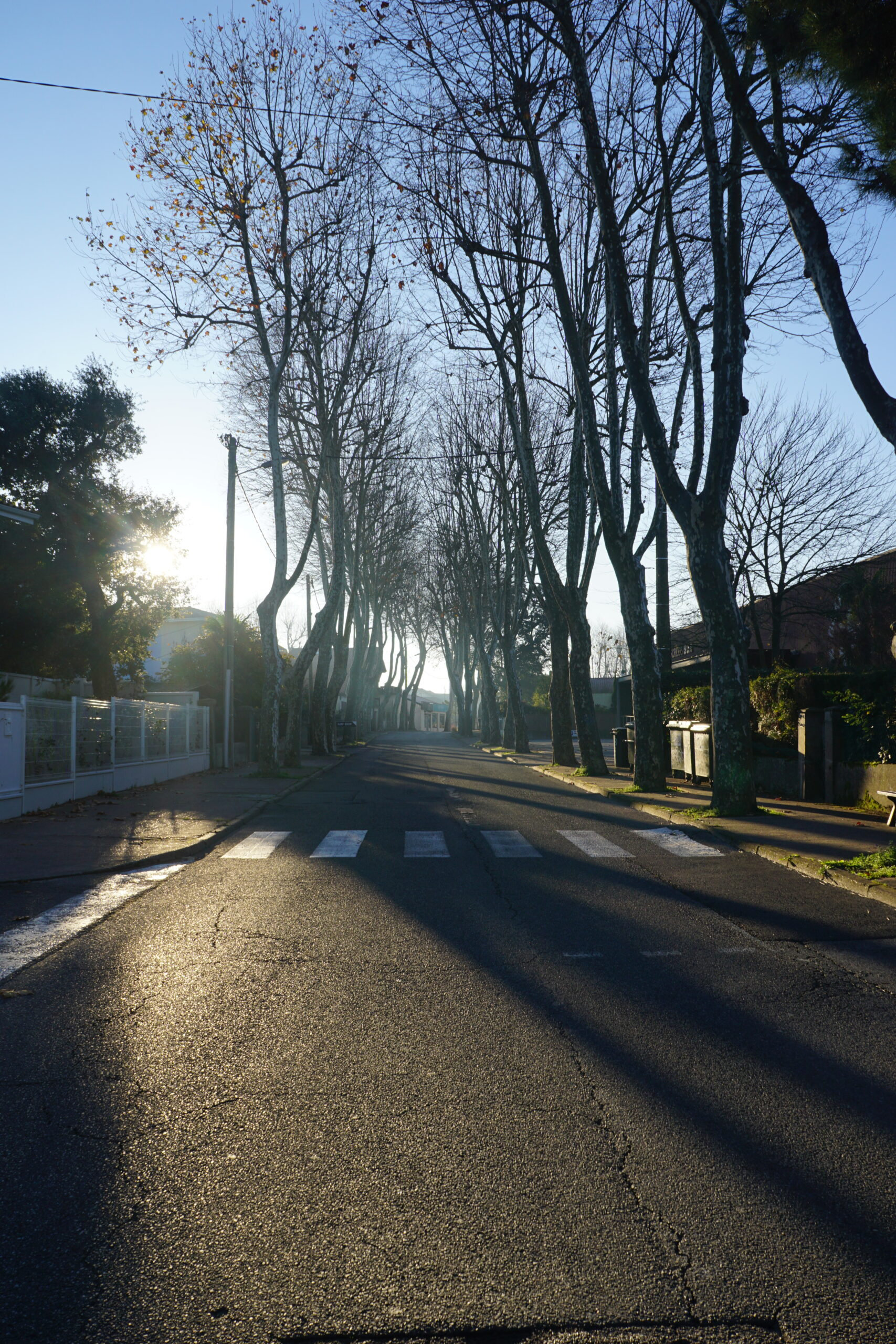 Photographie d'une rue déserte où les arbres forment des ombres chinoises sur le sol.