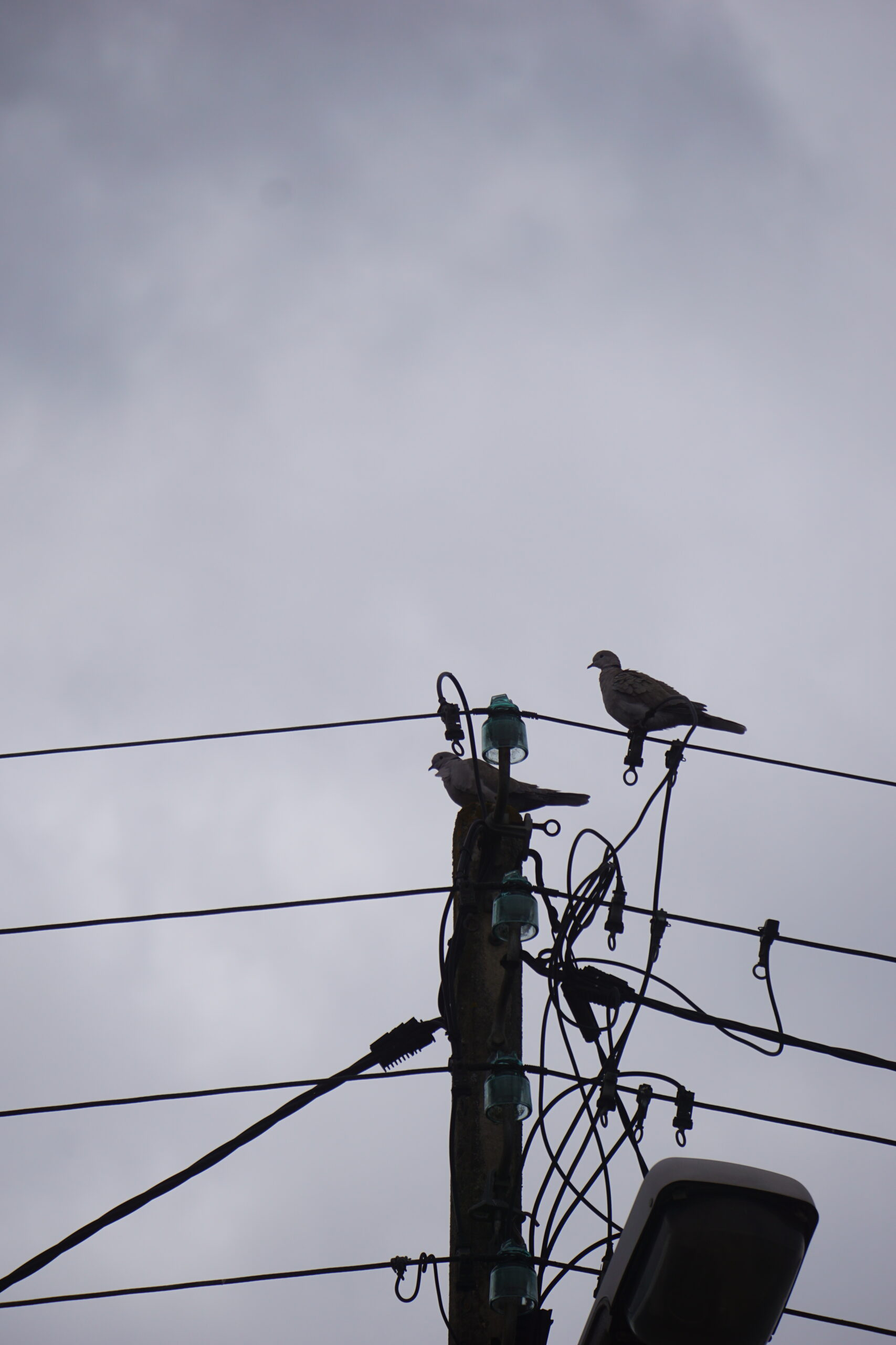 Photographie de deux tourterelles posées sur un poteau électrique. Le ciel est couvert.
