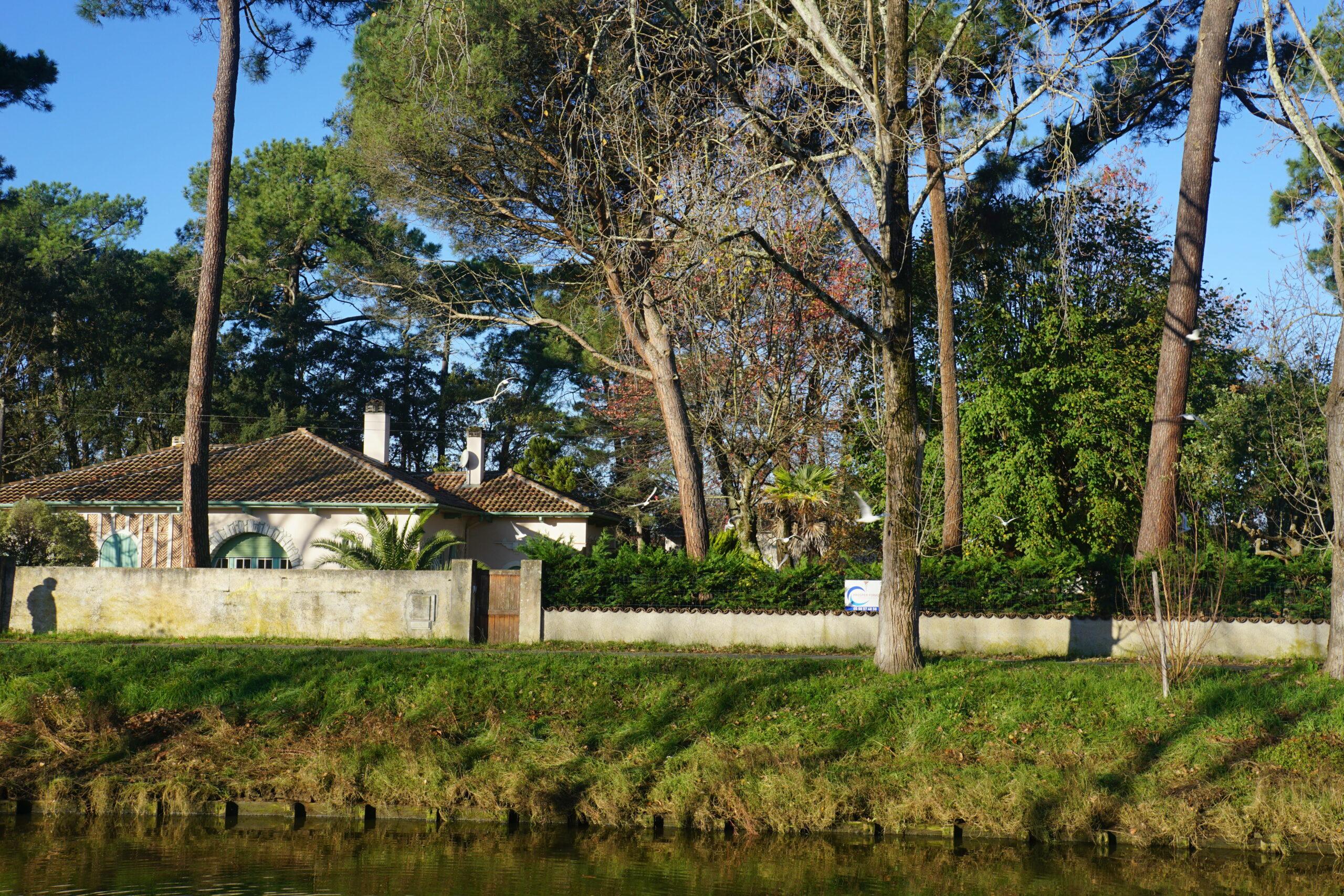 Photographie d'un bord de canal où un vol de mouettes est camouflé au milieu des pins. On aperçoit l'ombre d'une promeneur sur un muret.