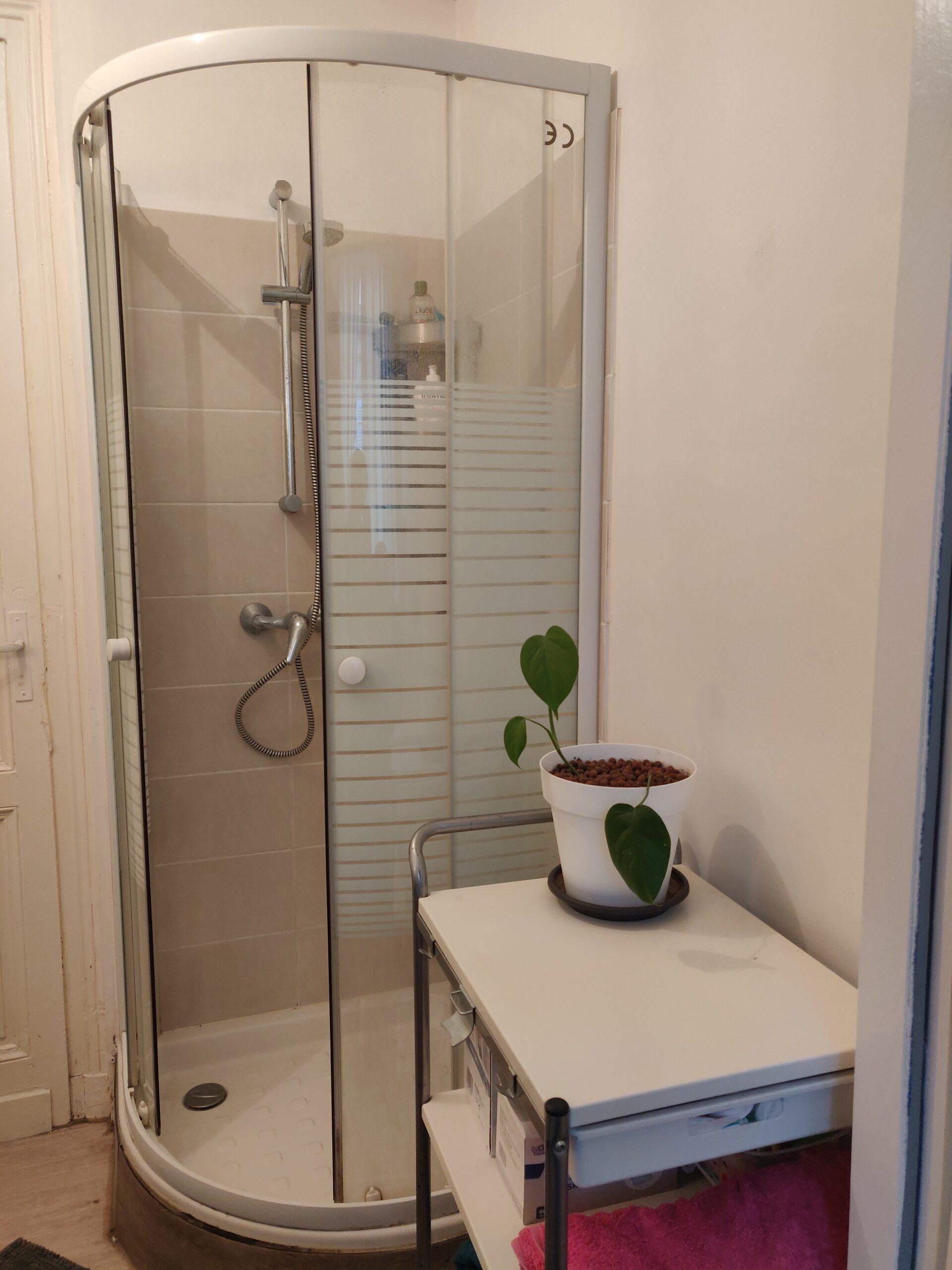 Photo d'une salle de bain. En arrière-plan, une douche, ouverte. Au premier plan, un meuble blanc, où est posé une plante verte dans son pot blanc.