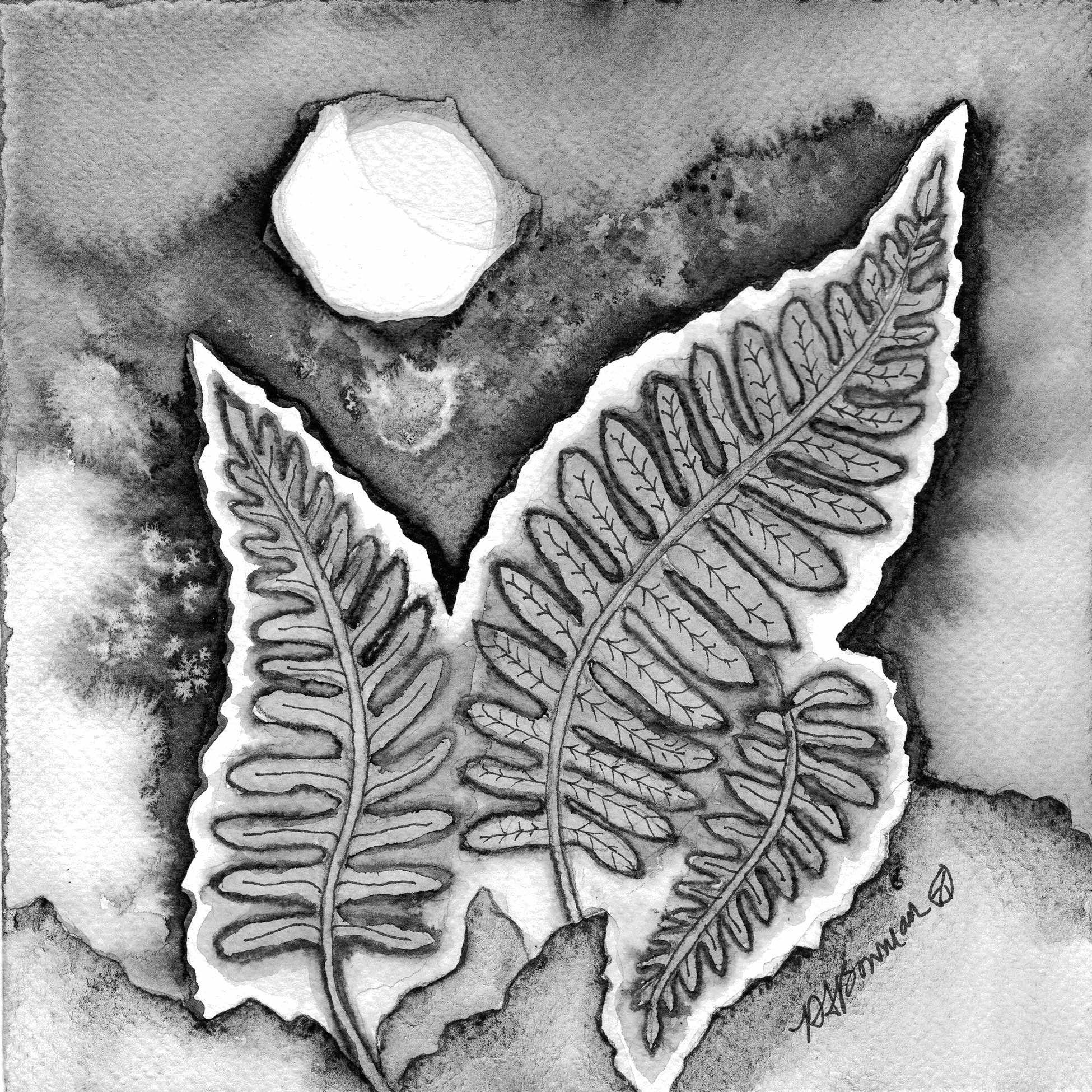 Œuvre de Deborah Bowman, Aquarelle, encres pigment, crayon couleur aquarellé sur papier aquarelle représentant des fougères. Noir et blanc.