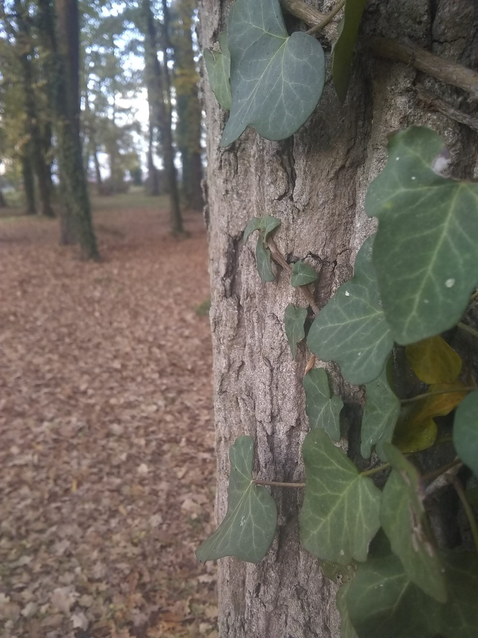 Ecorce d'arbre près de l'appatement