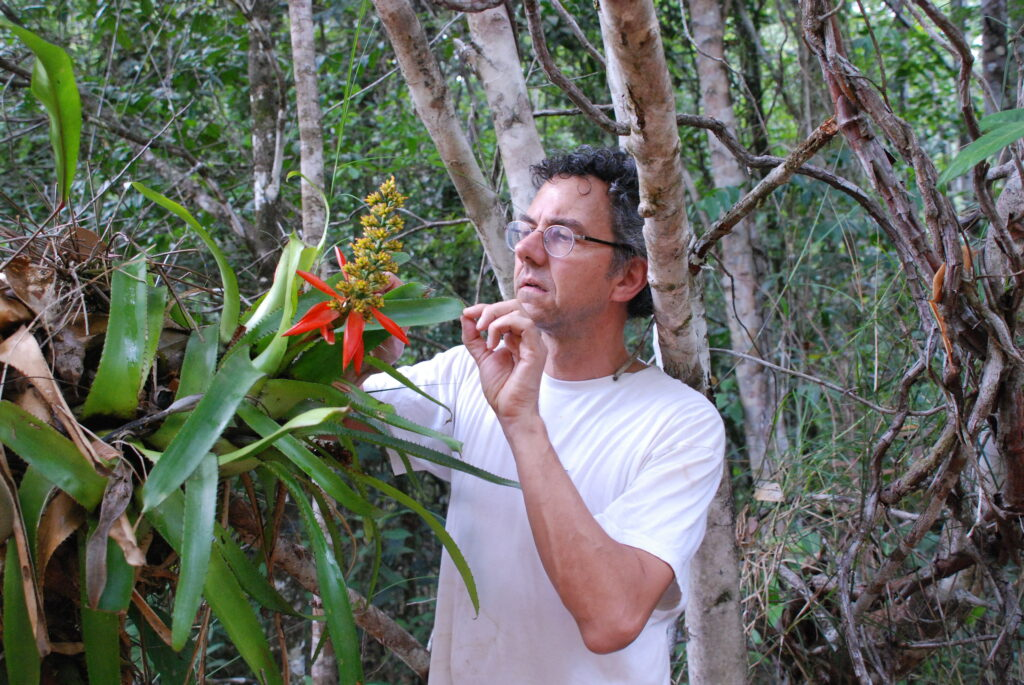 Bruno Corbara observe de près de longues feuilles d'arbre, tout près d'une grande fleur aux pétales rouges.