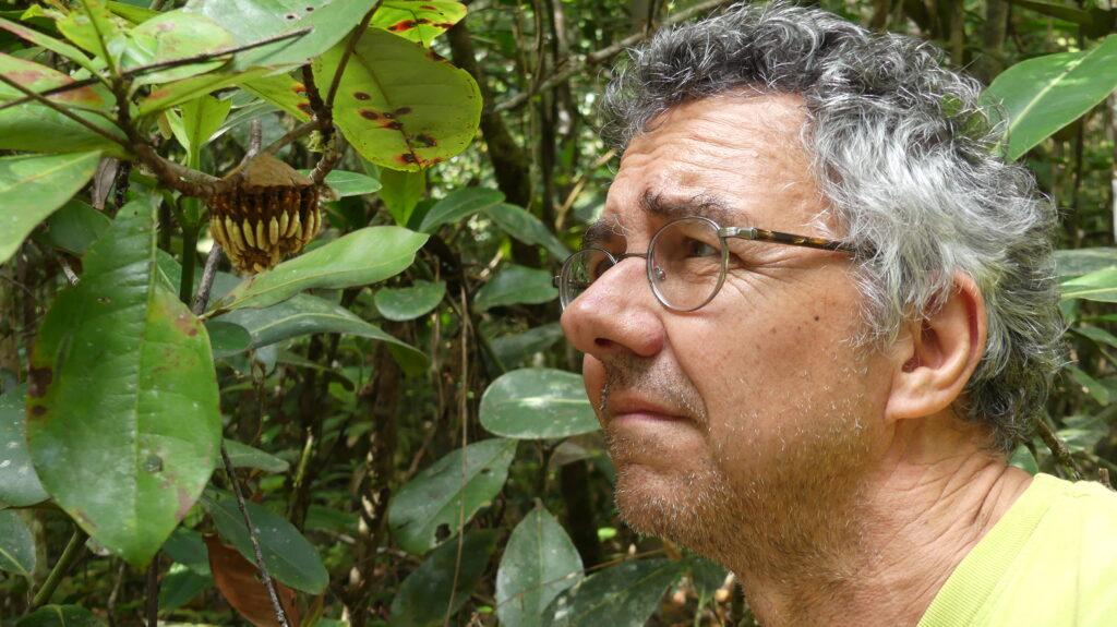 Le chercheur observe de près un groupe de guêpes accrochées à une branche d'arbre.