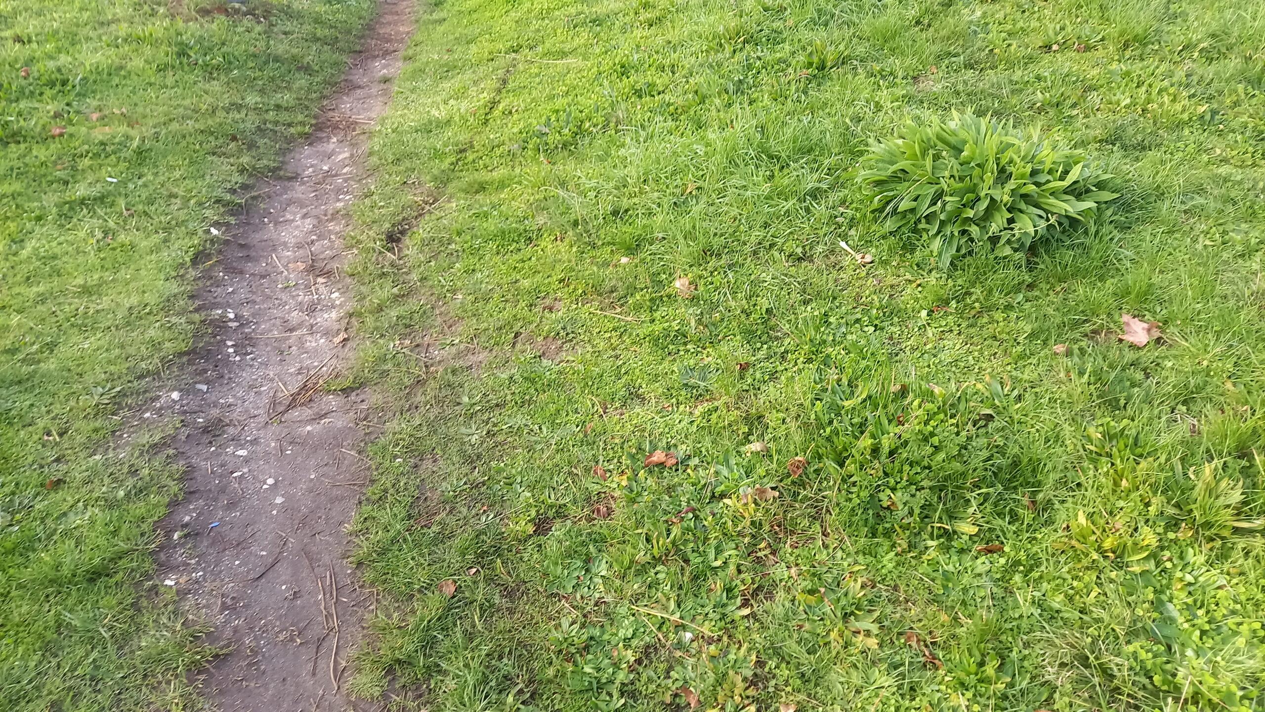 Sentier en terre bordé d'herbes.
