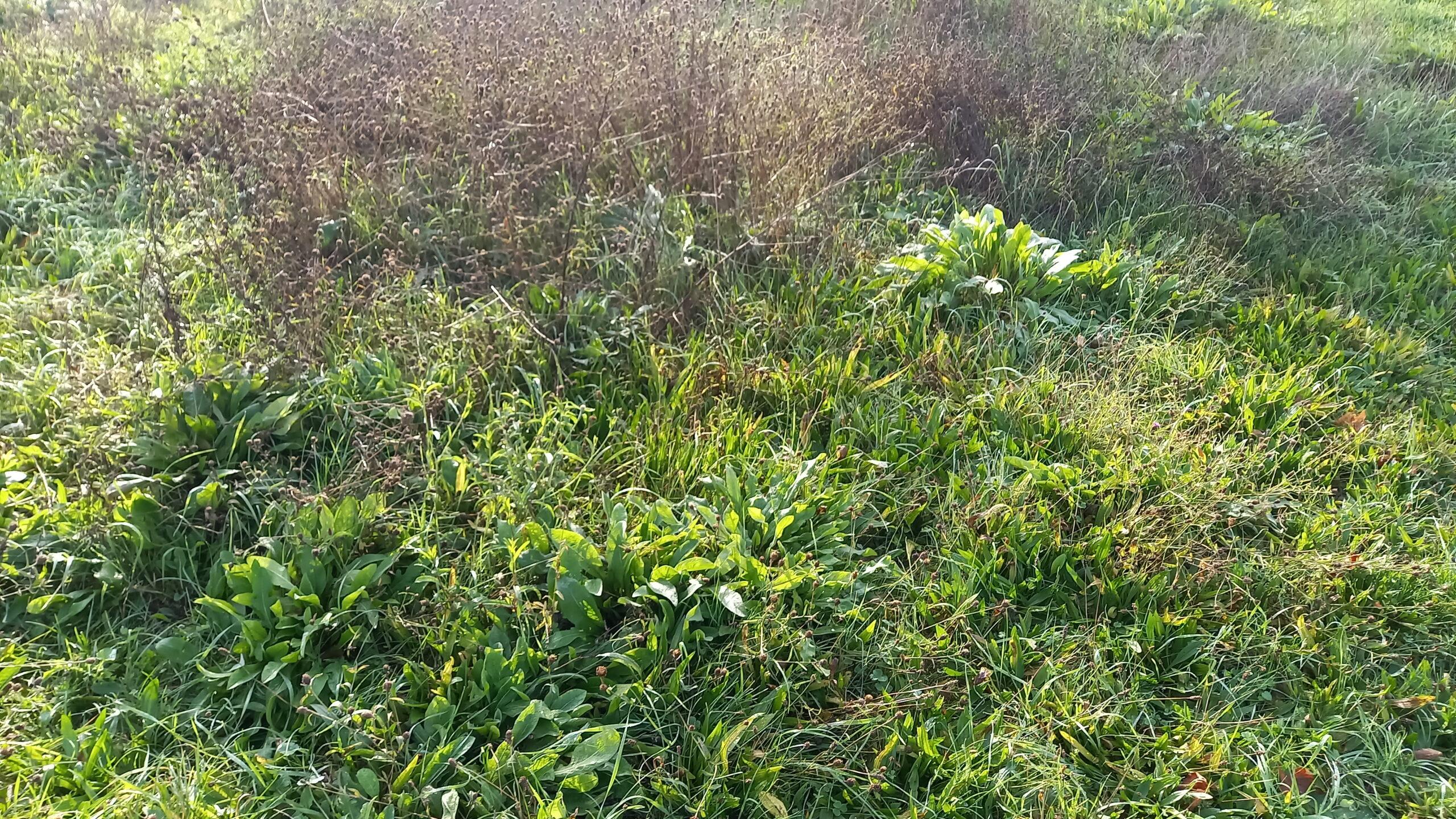 Herbes et diverses plantes sauvages.