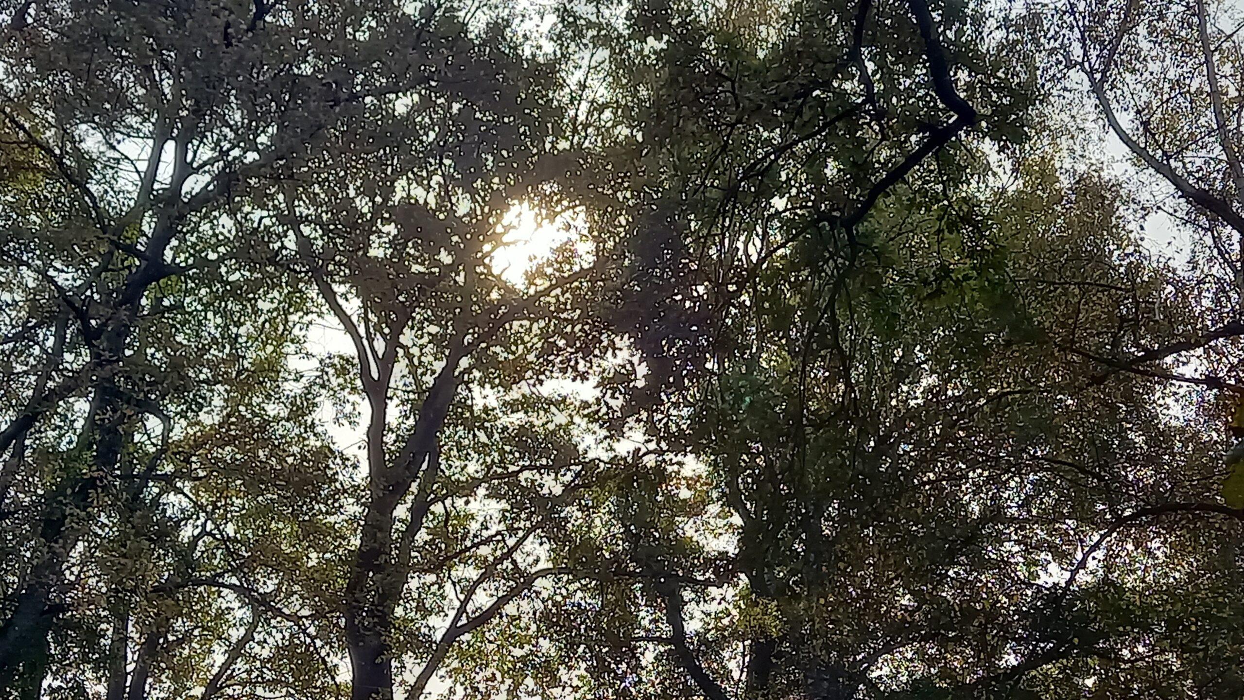 Soleil filtrant à travers les feuilles des arbres.