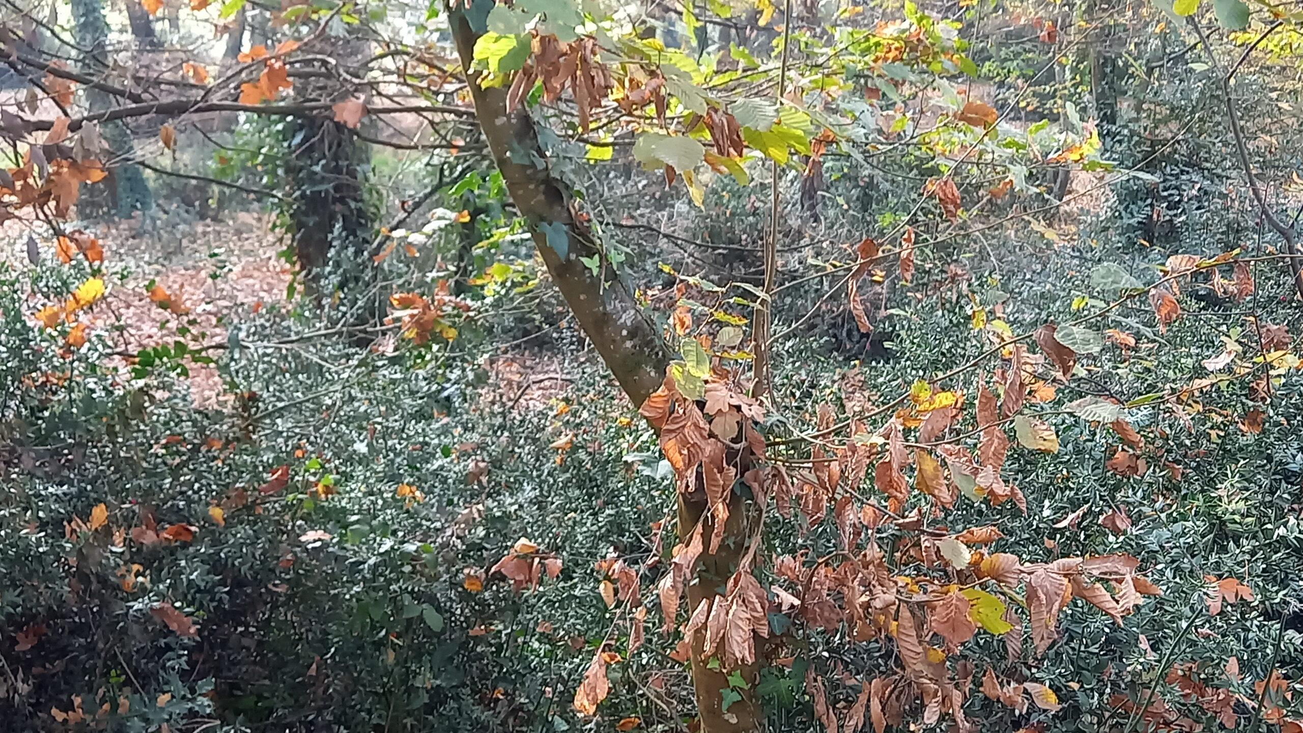 Feuilles mourantes sur les branches d'un jeune arbre.
